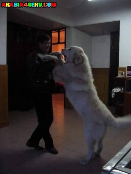 اضخم كلاب العالم