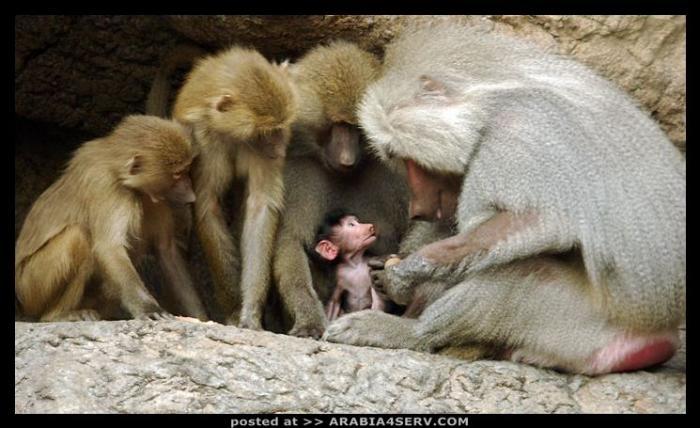 اجمل صور الحيوانات واروعها واحدثها للتحميل و المشاهدة