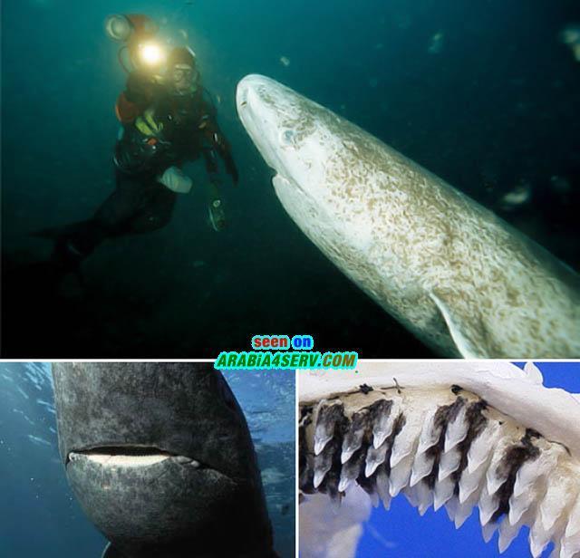 صور رهيبة لاسماك القرش