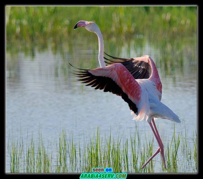 صور اجمل طيور