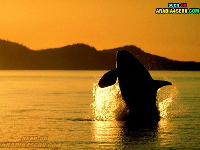 7 صور مميزه للدولفين صديق الانسان