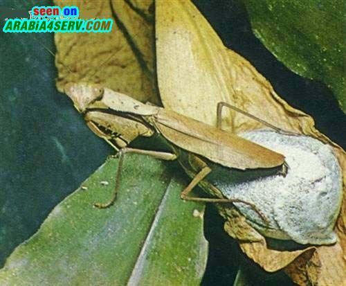 صور حشرات غريبة