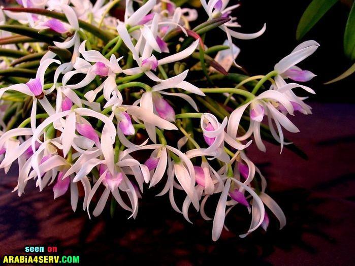 صور  ازهار رائعة