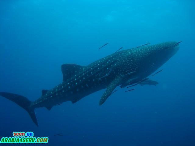 صور الحوت - صور مذهلة نادرة روعة جميلة جدا و غريبة للحوت