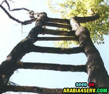 صور اغرب الاشجار فى العالم