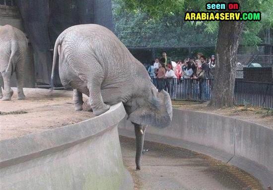 صور حيوانات مضحكة طريفة كوميدية تحميل و مشاهدة