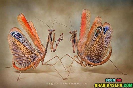 صور حشرات نادرة غريبة تحميل و مشاهدة