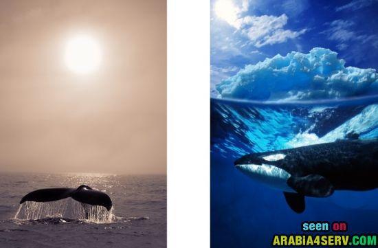 صور للحوت - صور اضخم حيوانات الارض