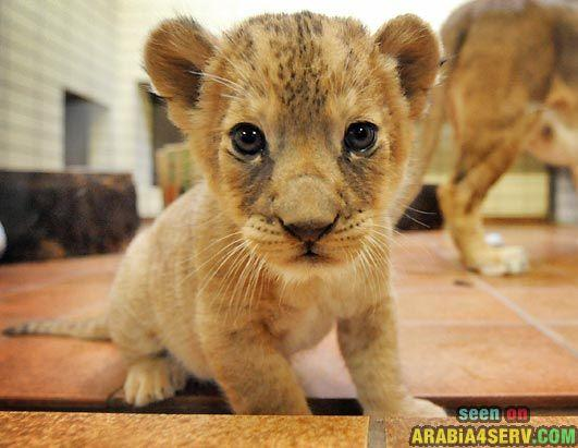 صور صغار الحيوانات