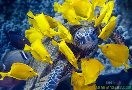 صور الحياة فى اعماق البحار والمحيطات