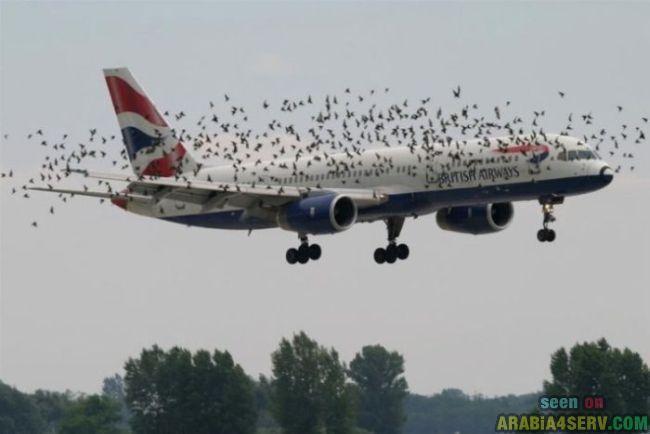 صور طائرات