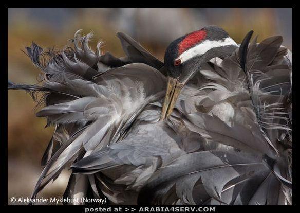 صور الحياة البرية
