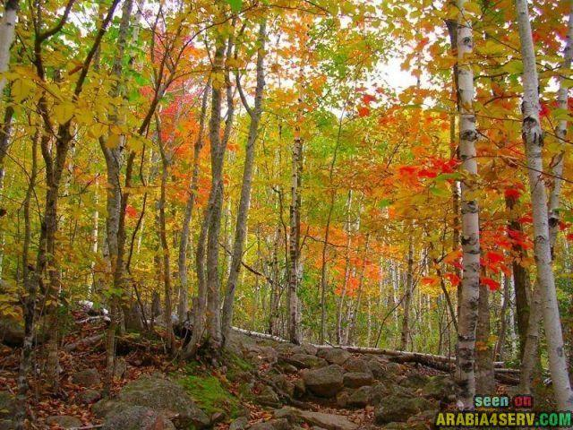 صور فصل الخريف وتساقط اوراق الشجر