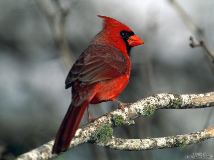 صور وخلفيات لطيور وعصافير رائعة جدا