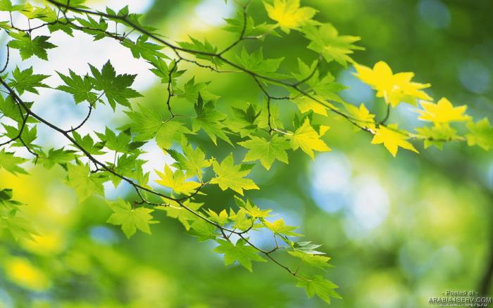 صور طبيعية لأوراق الأشجار روعه جدا