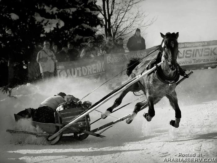اجمل صور الخيول
