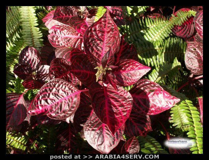 صور نباتات الغابات