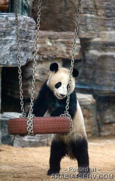 صور حيوانات مضحكة و طريفة و نادرة و غريبة