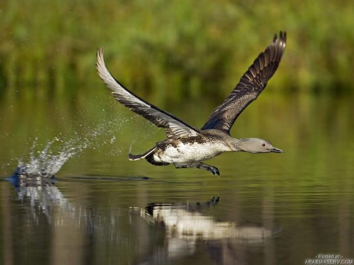 صور طيور روعة - صور روعه
