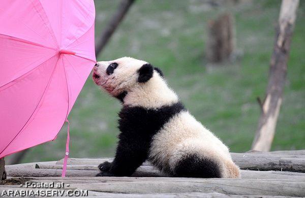 صور جميلة لحيوانات لذيذة