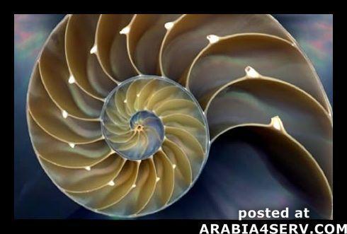 صور اشكال هندسية طبيعية