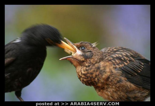 صور طيور متنوعة جميلة رائعة