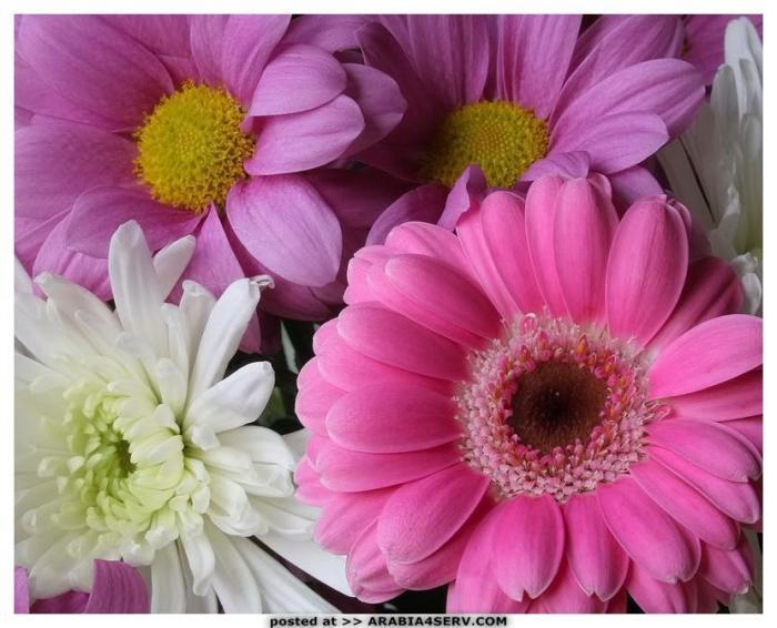 صور خلفيات زهور  طبيعية جميلة روعة جديدة للتحميل