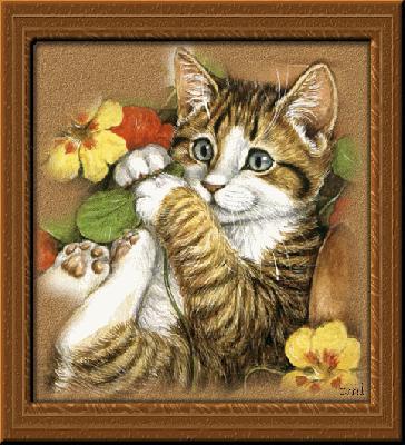 صور قطط متحركة للتحميل و المشاهدة صور روعة