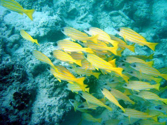صور طبيعية اسماك ملونة بالمحيطات