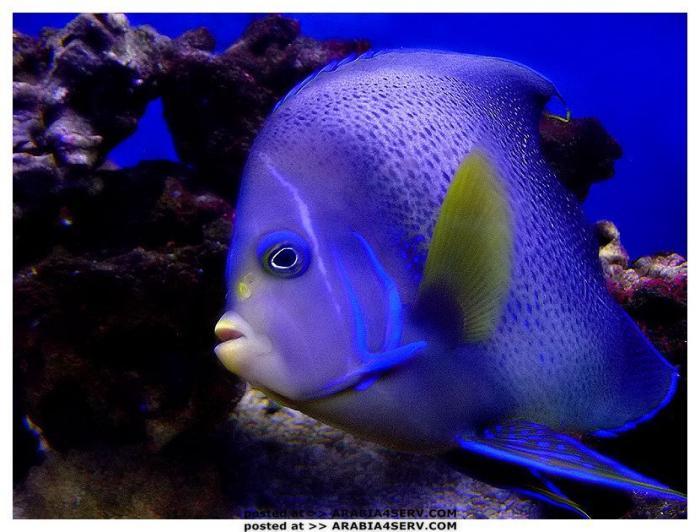 صور اسماك ملونة