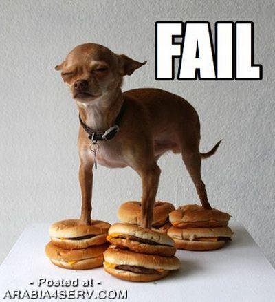 صور اكلات شهية (ممنوع لأصحاب المعدة الضعيفة)