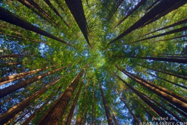 صور غابات