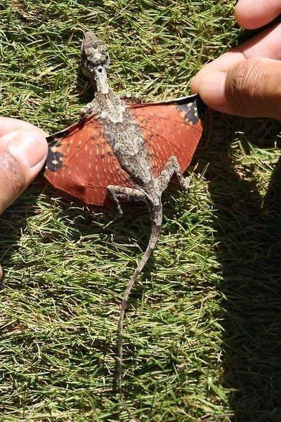 صور ديناصور حقيقى ؟