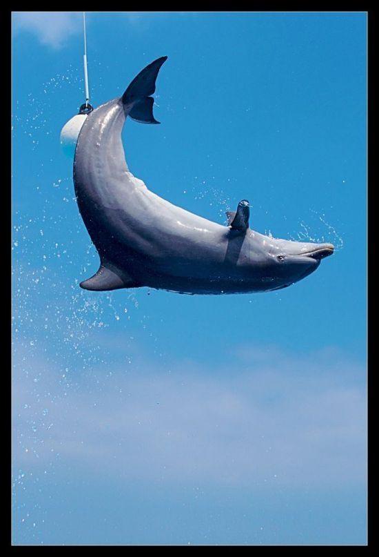 صور دلافين جميلة