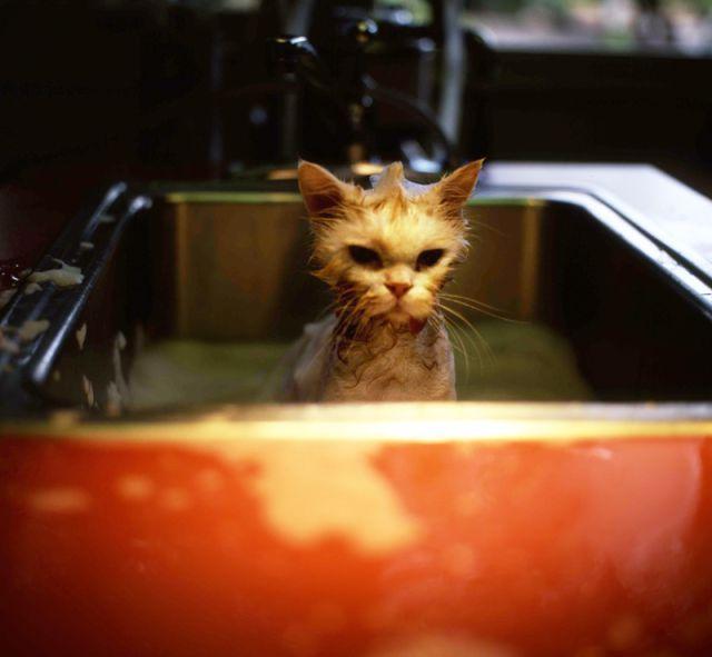 مجموعة صور قطط