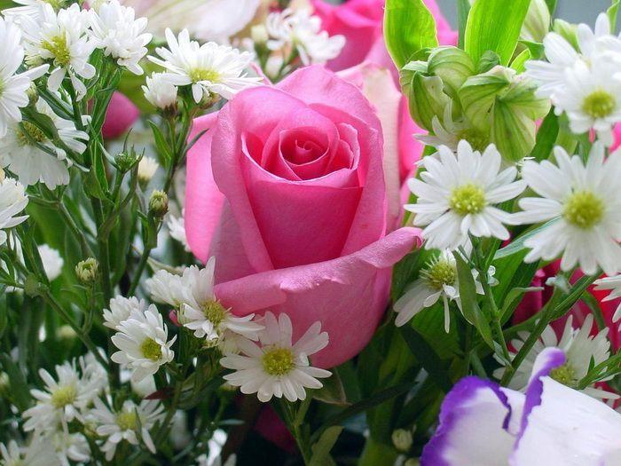 زهور رائعة