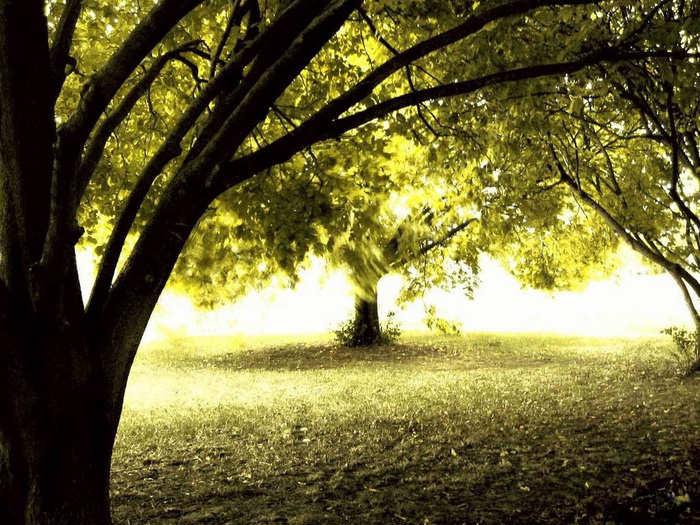 اشجار جميلة