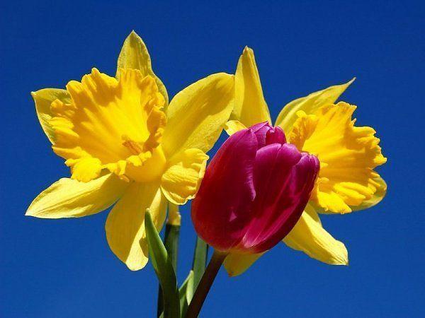 زهور ملونة