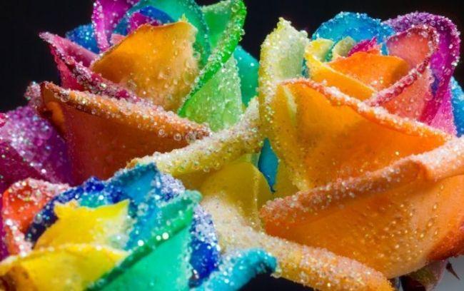 اجمل صور الزهور الملونة
