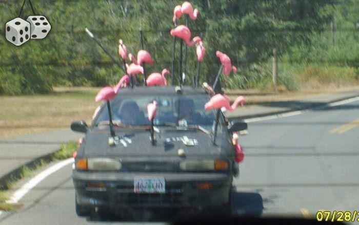 صور سيارات - مضحكة - غريبة - طريفة