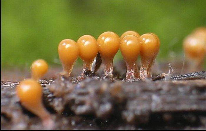 صور نبات المشروم