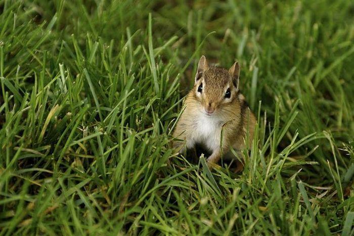 صور حيوان السنجاب جميلة جدا روعة