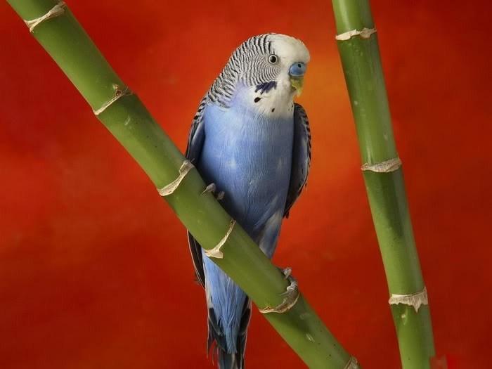 صور طيور ملونة جميلة جدا