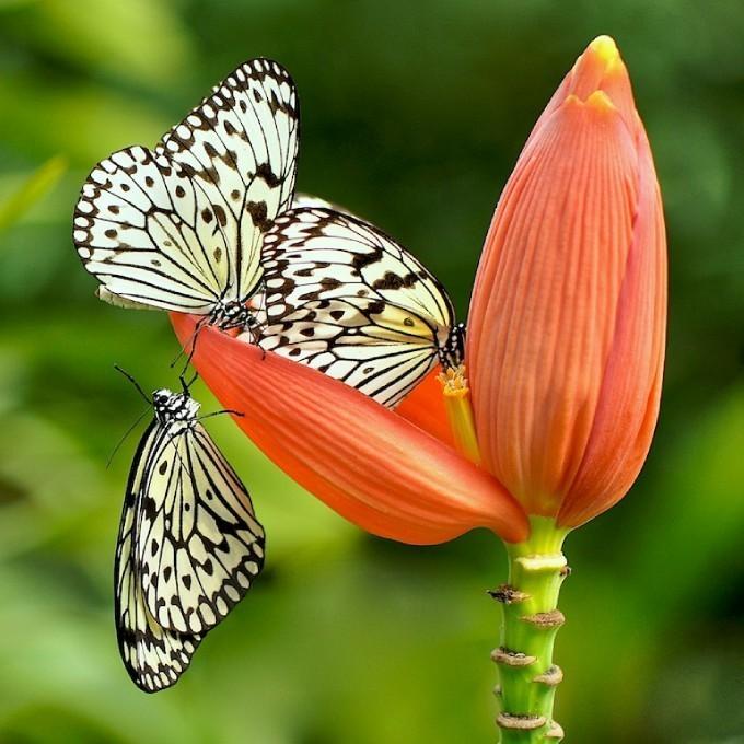 ���� ��� ������  - Butterflies