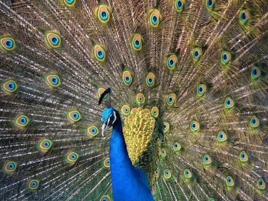 صور طيور ملونة رائعة - جميلة