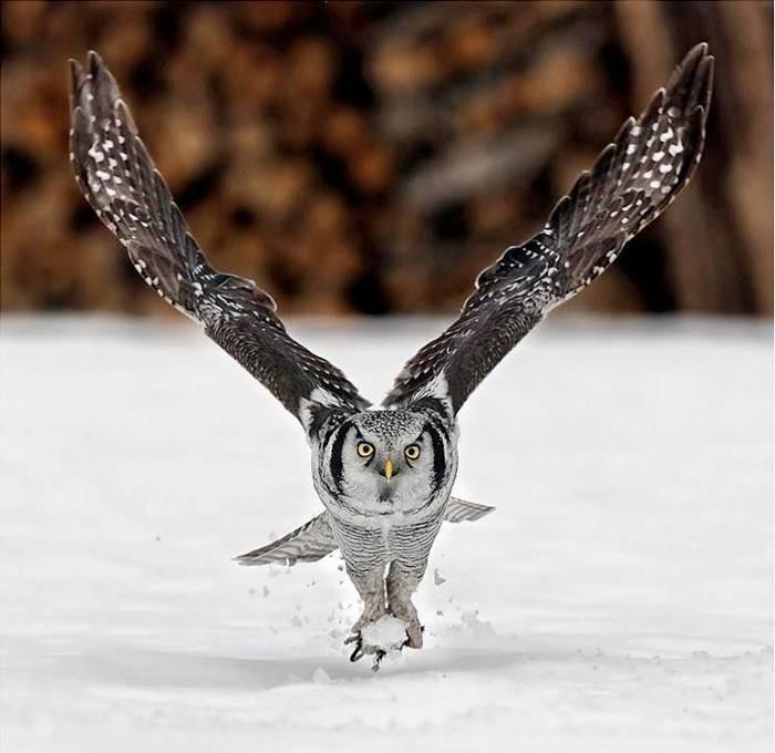 صور الطيور وهي تطير في السماء