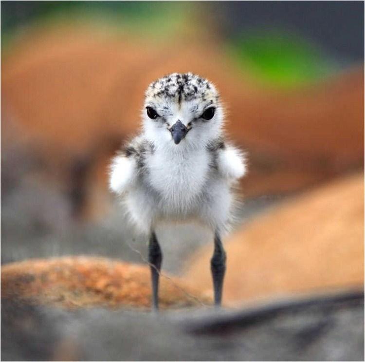 صور صغار الطيور