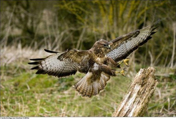 صور حيوانات وطيور برية