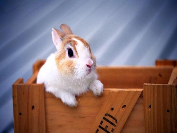 اجمل صور ارانب - اجمل ارانب