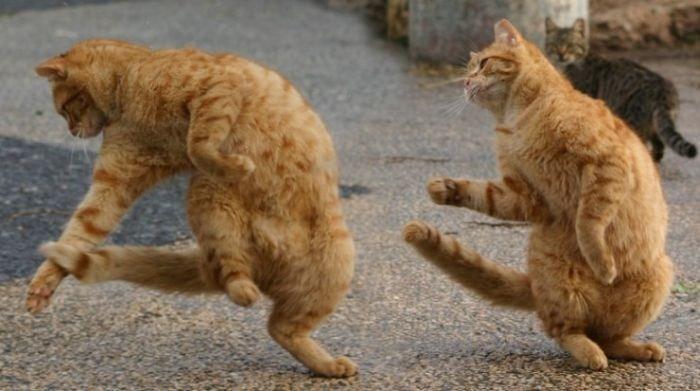 صور قطط جديدة 2014